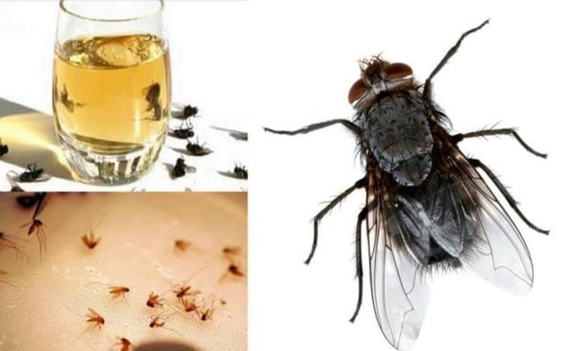 Éliminez les mouches, les cafards et les moustiques de votre maison