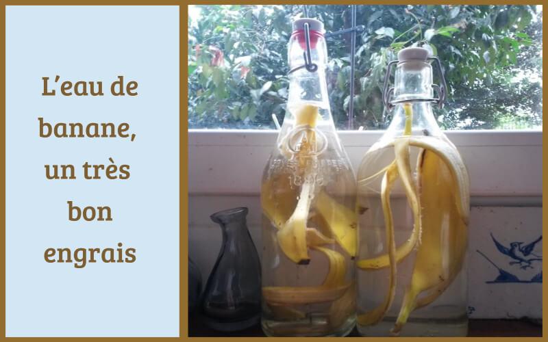 L'eau de banane, un très bon engrais