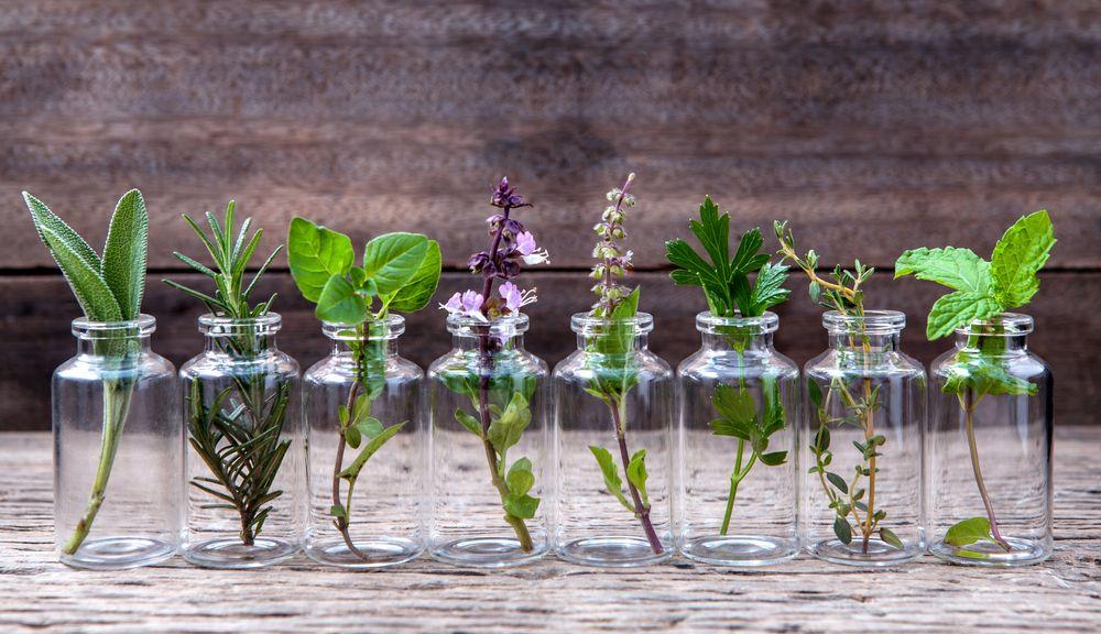 10 plantes que vous pouvez cultiver en intérieur dans l'eau toute l'année