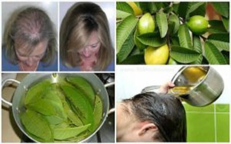 Les feuilles de goyave peuvent 100% arrêter votre perte de cheveux