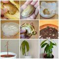 16 fruits et légumes à faire pousser À L'INFINI à partir de leurs restes