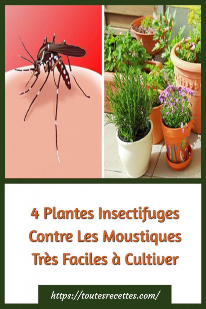 Découvrons les 4 plantes utiles contre les moustiques