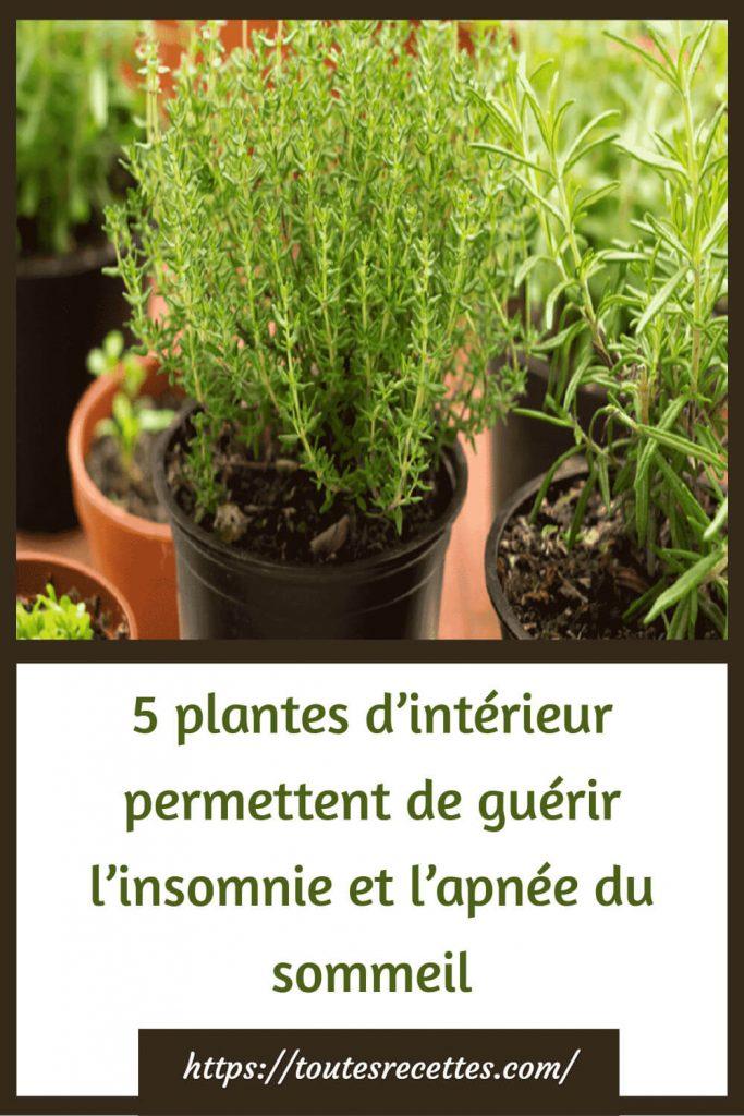 5 plantes d'intérieur permettent de guérir l'insomnie et l'apnée du sommeil