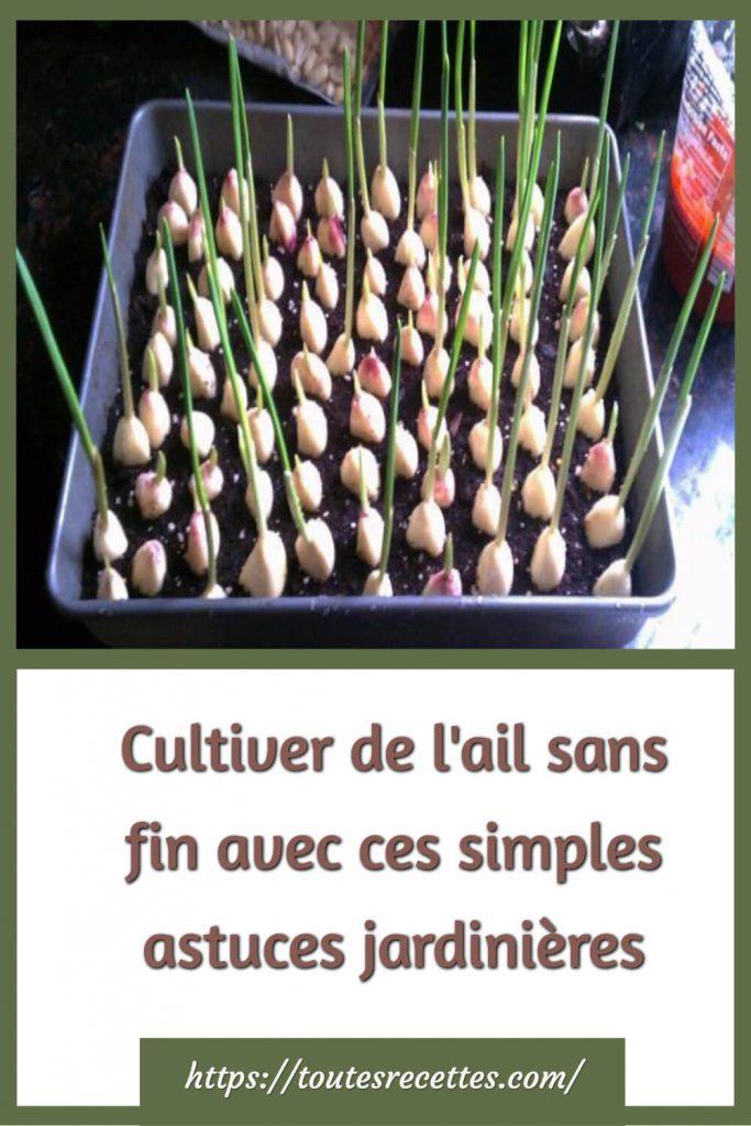 Cultiver de l'ail sans fin avec ces simples astuces jardinières