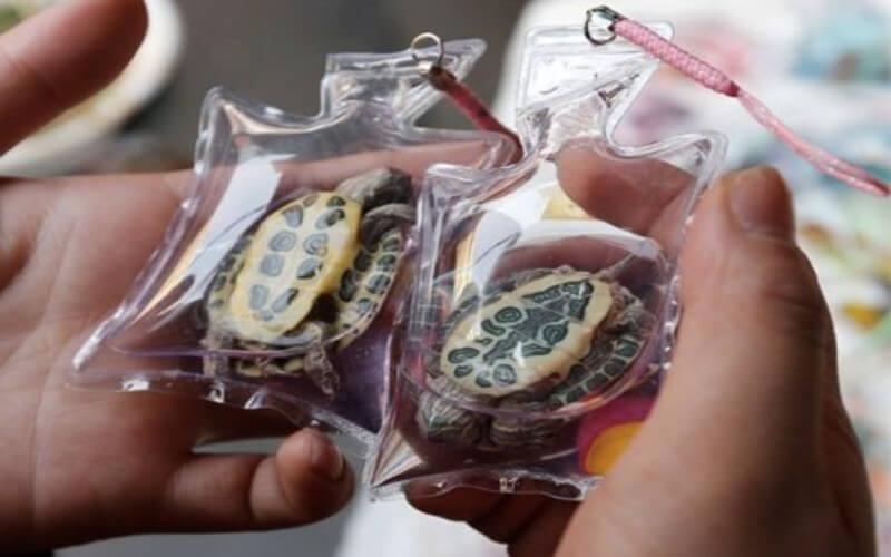 Des animaux vivants sont enfermés dans des porte-clés en Chine et vendus comme bijoux