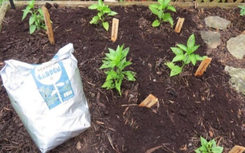 Du Marc de Café pour les Plantes Une Super Astuce de Grand-mère