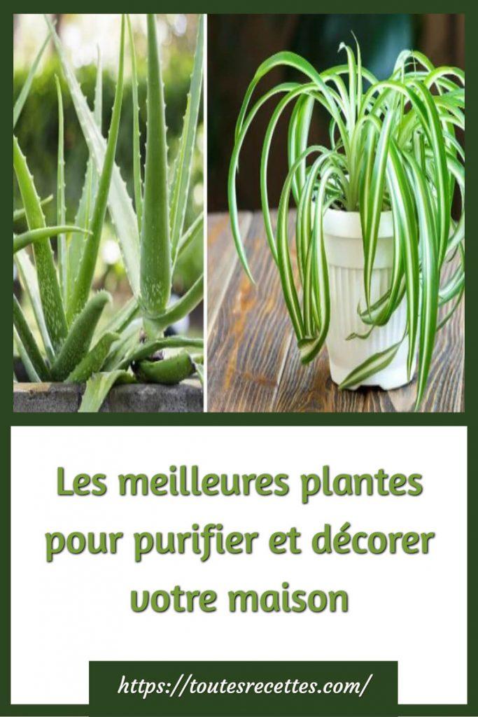 Voici les 4 meilleures plantes qui vous aideront à assainir et purifier votre intérieur