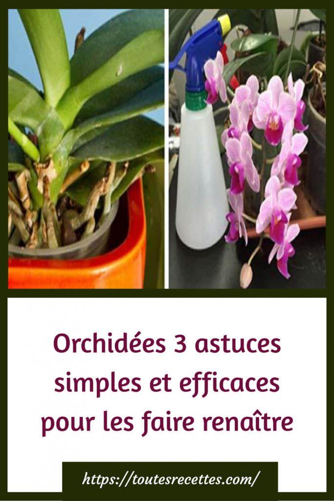 Orchidées 3 astuces simples et efficaces pour les faire renaître