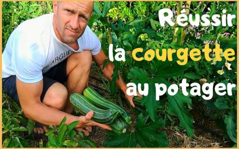PLANTER LES COURGETTES COMMENT LES RÉUSSIR