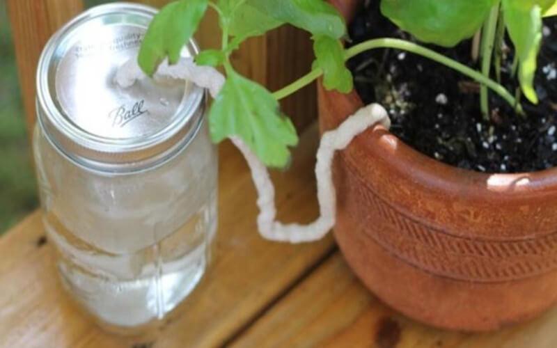 6 astuces pour arroser ses plantes pendant les vacances
