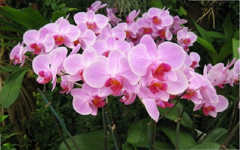 Comment faire refleurir une orchidée