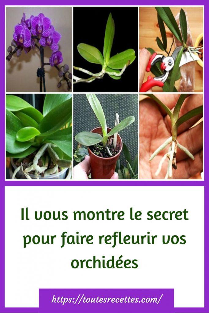 le secret pour faire refleurir vos orchidées
