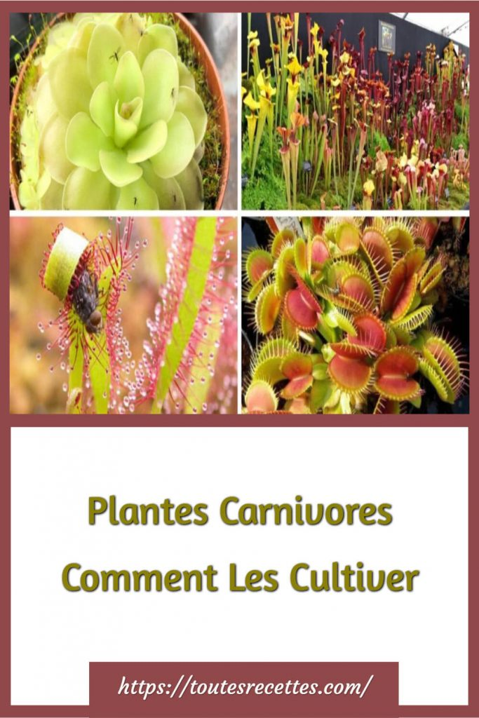 Plantes Carnivores Comment Les Cultiver