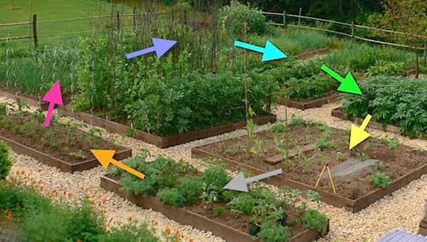 faire pousser des tomates: Pratiquez la rotation des cultures