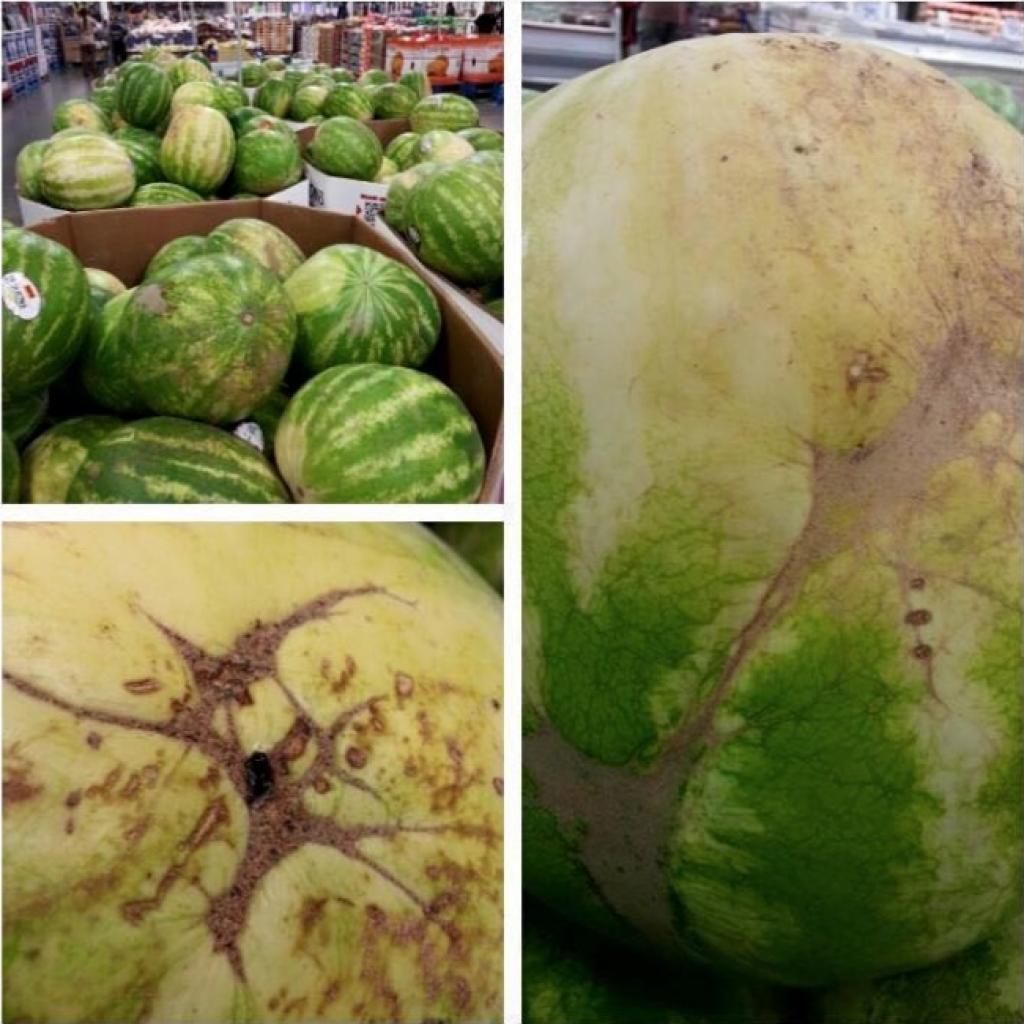 technique pour choisir un melon Vérifiez la « palmure »