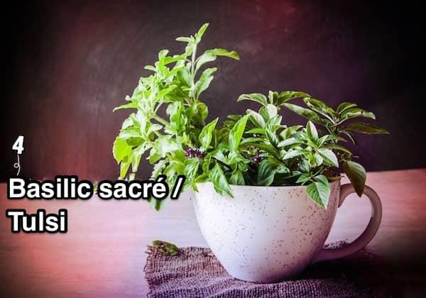 4. Basilic sacré