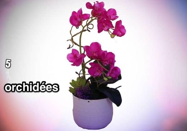 5. Orchidées