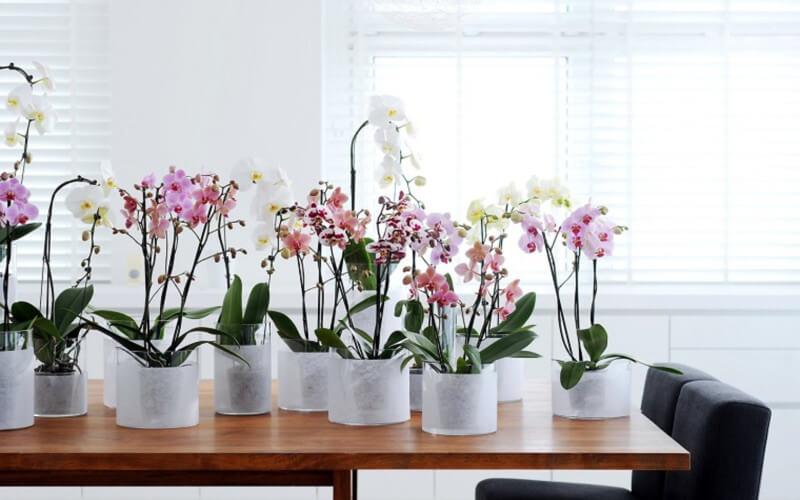 Comment Prendre Soin D'une Orchidée À La Maison