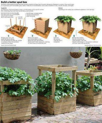 Sur le balcon, on cultive les pommes de terre dans un bac