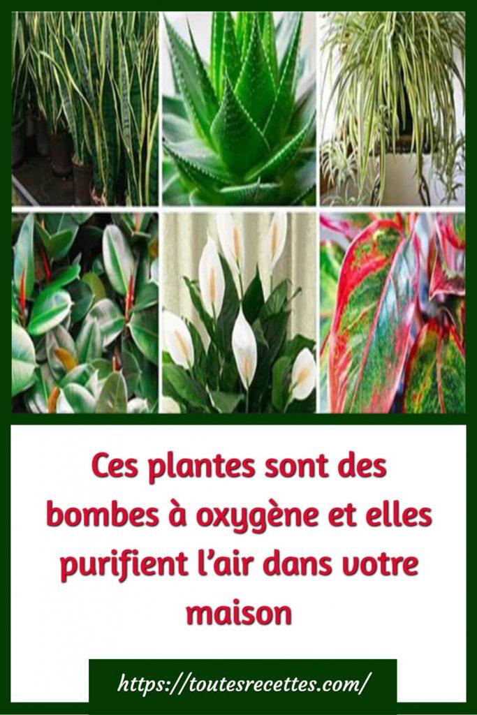Ces plantes sont des bombes à oxygène et elles purifient l'air dans votre maison