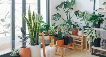 5 idées de jardin intérieur si vous n'avez pas de balcon ni de terrasse