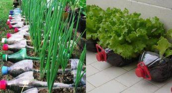 Cultivez 12 aliments avec de simples bouteilles en plastique